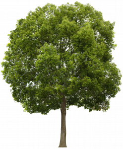 Tree-PNG