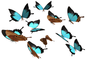 peacock_royal_butterfly_png_by_madetobeunique-d3070cg